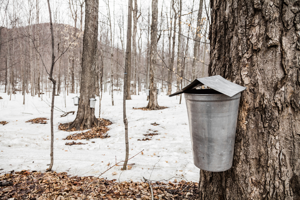 The Schoharie County Maple Festival